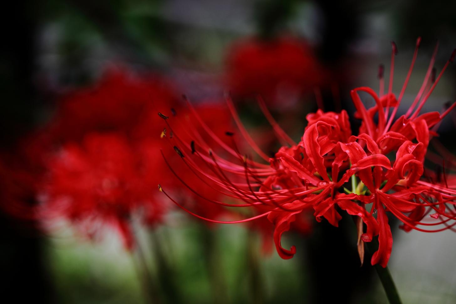 2012年10月野に咲く花&アート0032