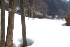 2014年3月雪景色 (9 - 10)